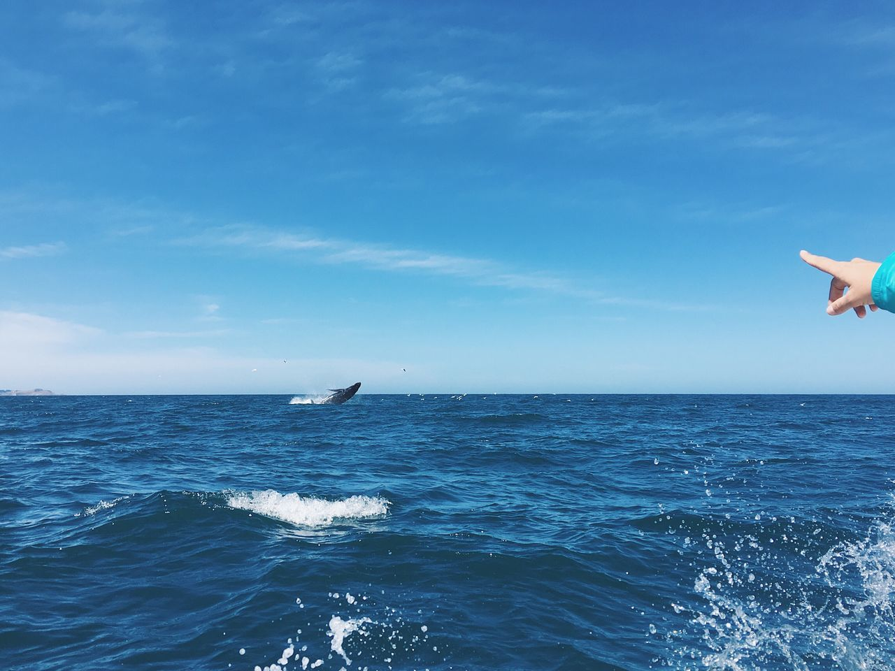 Whale Jumping Water Ocean Outdoors Beauty In Nature Horizon Over Water Sea Blue Scenics Animals In The Wild Pointing Human Body Part