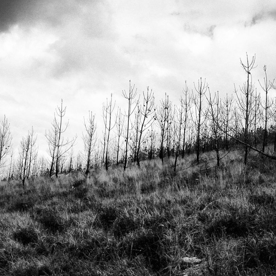La tristeza del bosque que ha sido quemado