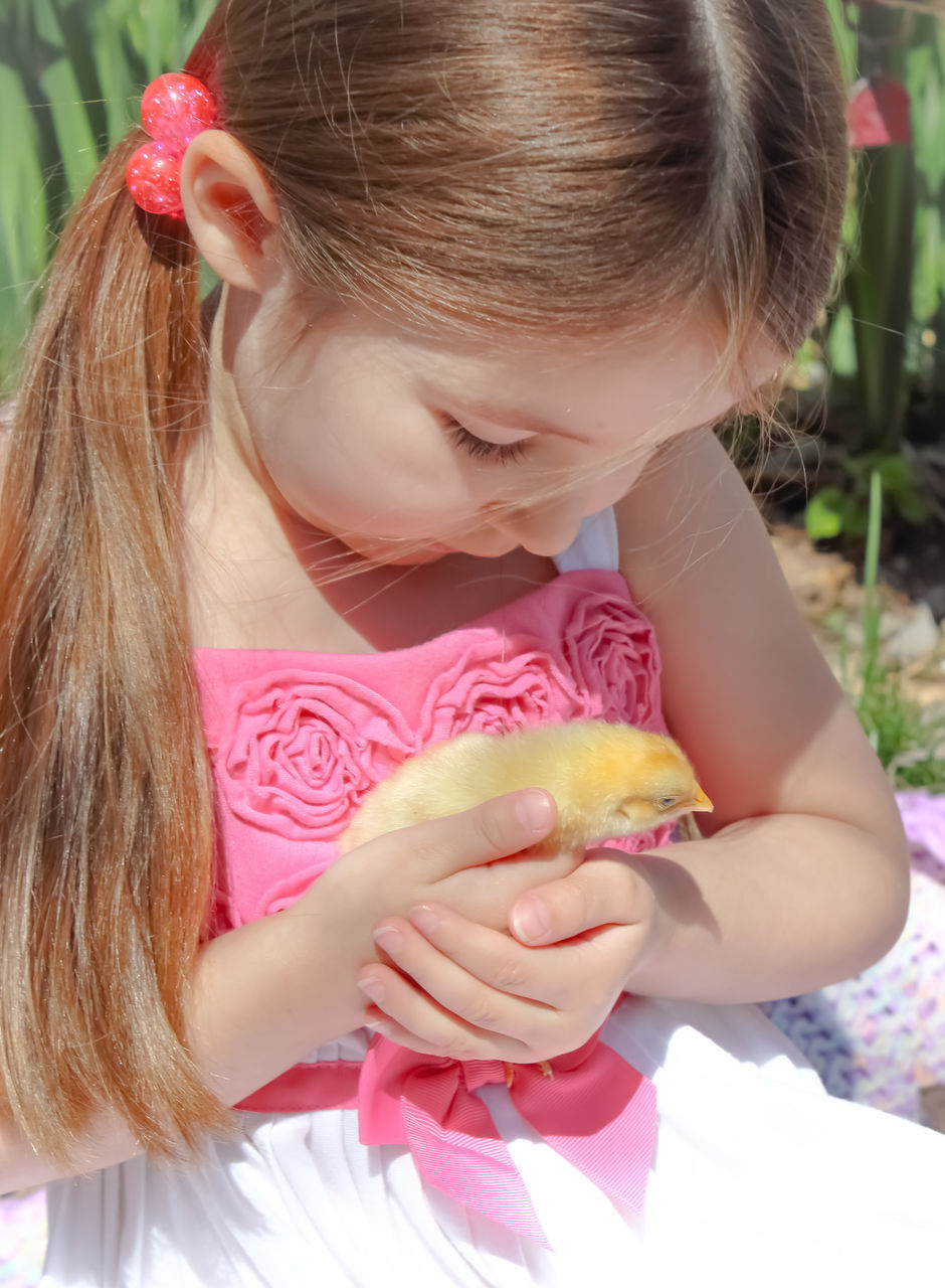 Close-Up Of Cute Girl Holding Baby Chicken Outdoors
