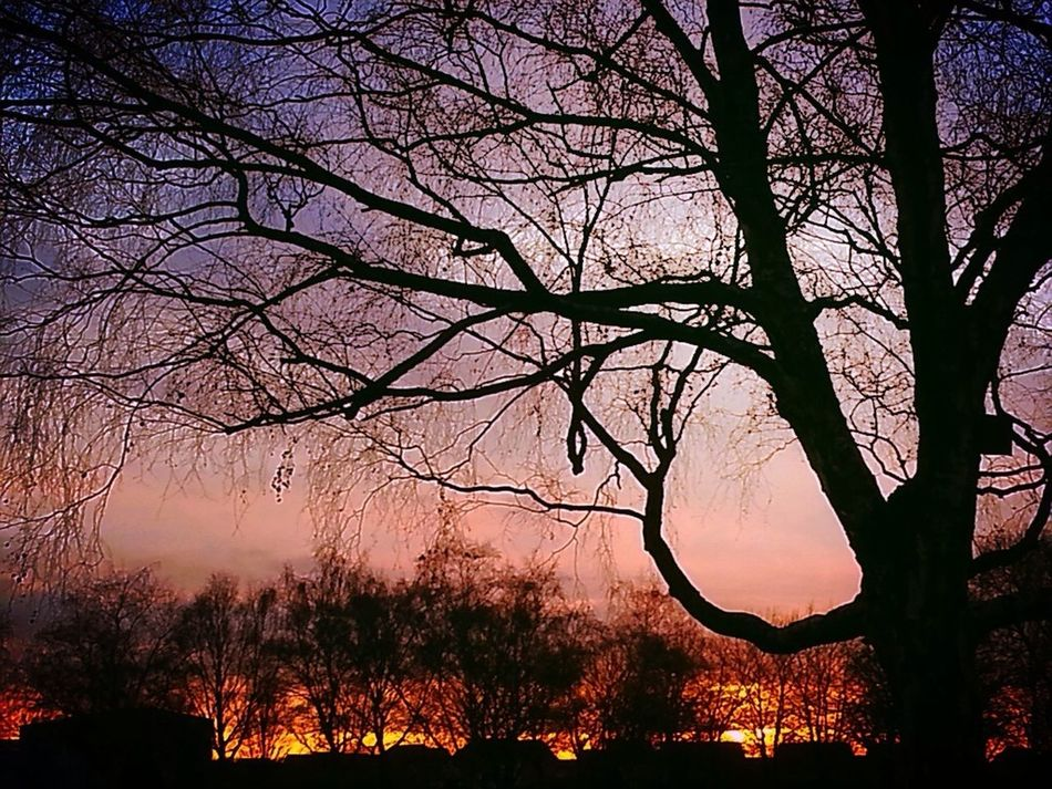 Winter Sunset My Sunsets Obsession Sunset Silhouettes Winter Sky Fire In The Sky Trees And Sky Beauty In Nature No People Dusk