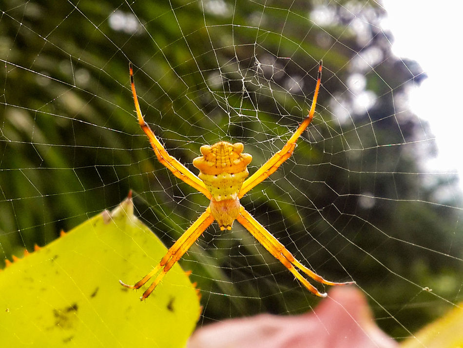 Spider Web Spider Nature Web One Animal Close-up Animal Wildlife Animal Themes Animals In The Wild Beauty In Nature Fragility Outdoors Bugs Life Costa Rica Macro Travel Insect Art Is Everywhere Spiderworld Spider Silk Nature's Design Focus On Foreground Animal Leg Day No People