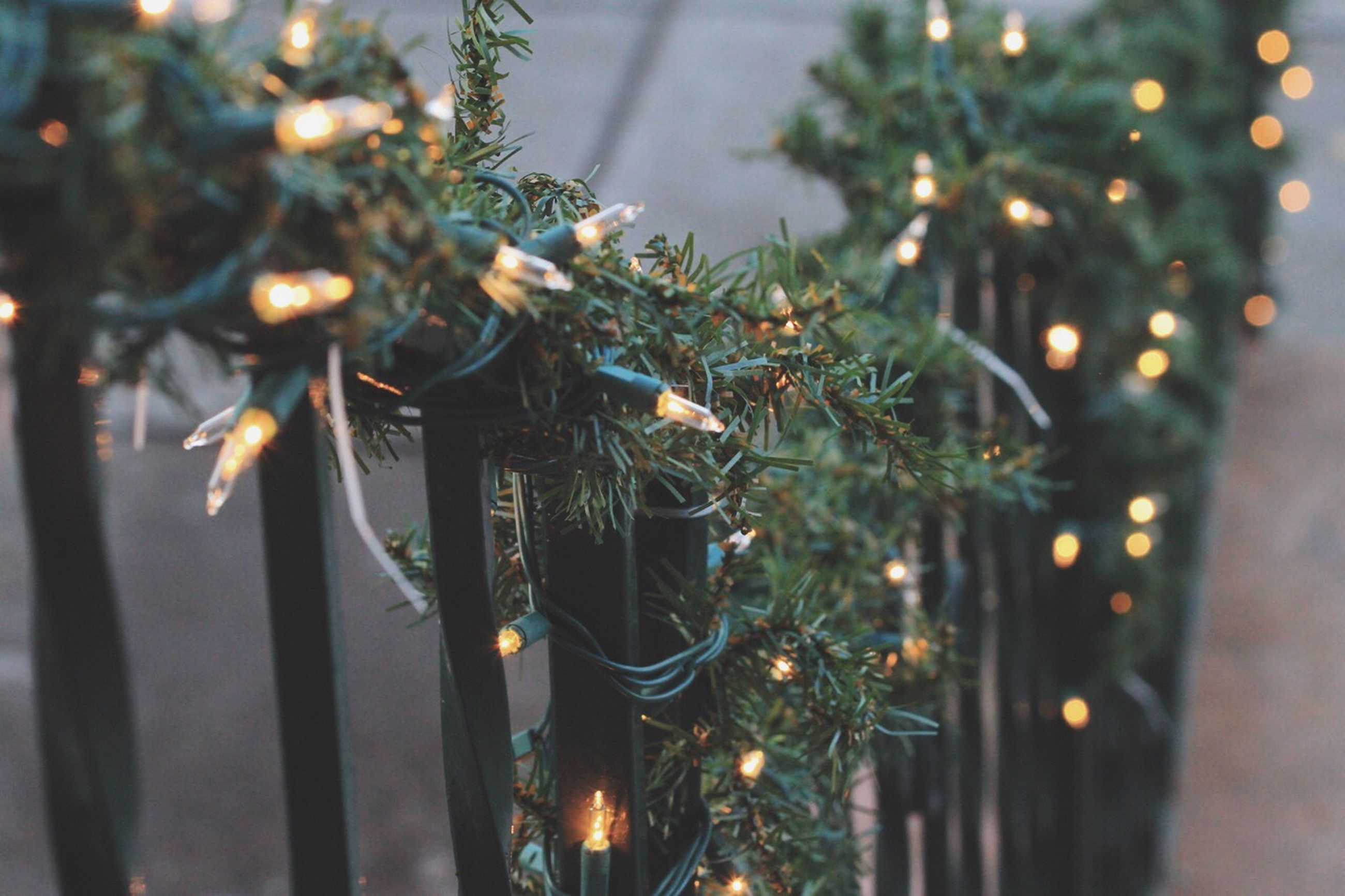 illuminated, focus on foreground, close-up, night, growth, lighting equipment, decoration, plant, fragility, hanging, selective focus, water, nature, no people, christmas tree, reflection, outdoors, flower, christmas decoration, spider web