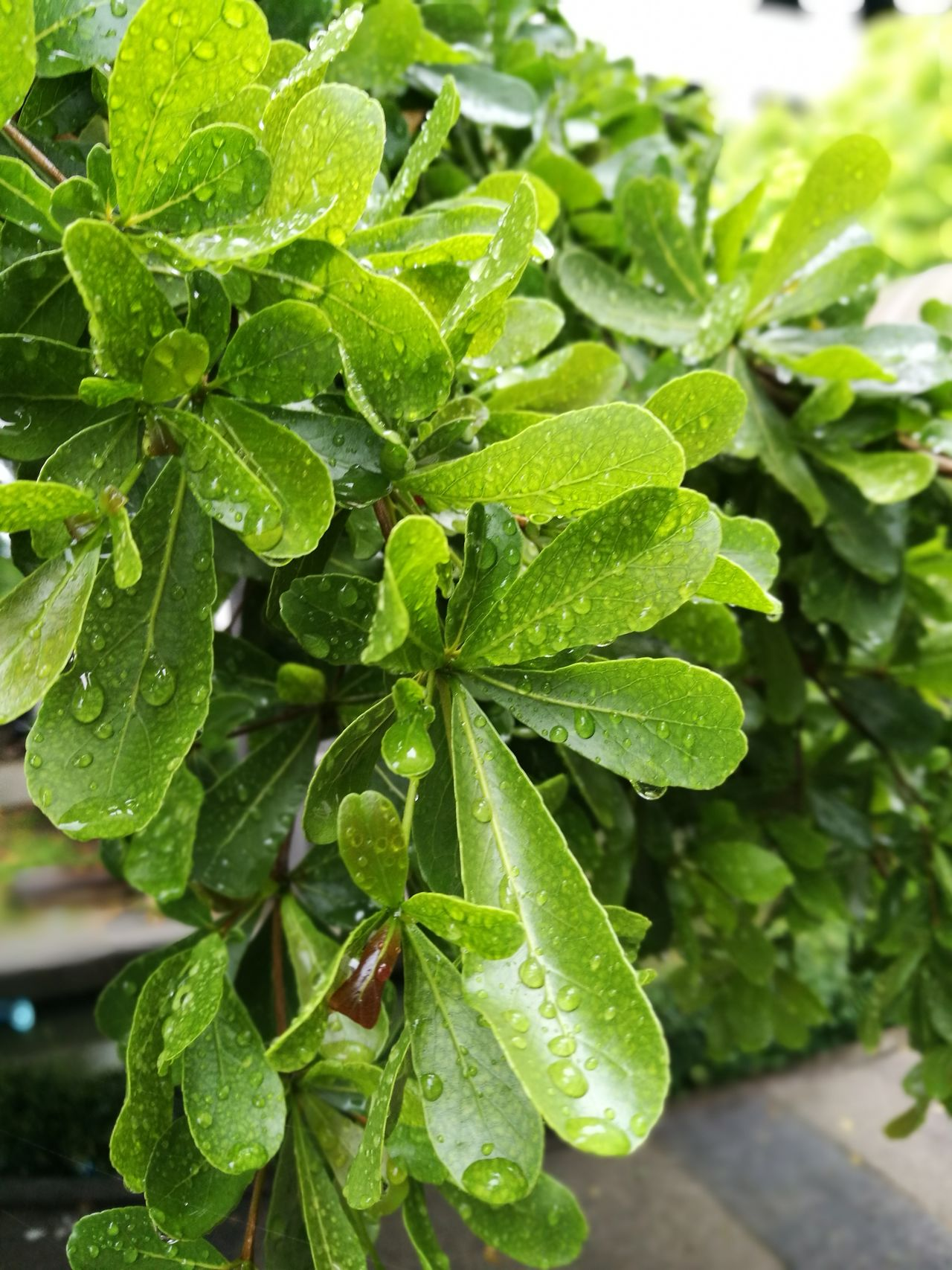Leaf Green Color Plant Growth Close-up Nature No People Freshness Agriculture Outdoors Day Beauty In Nature Healthy Eating Freshness Plant Growth Nature Beauty In Nature
