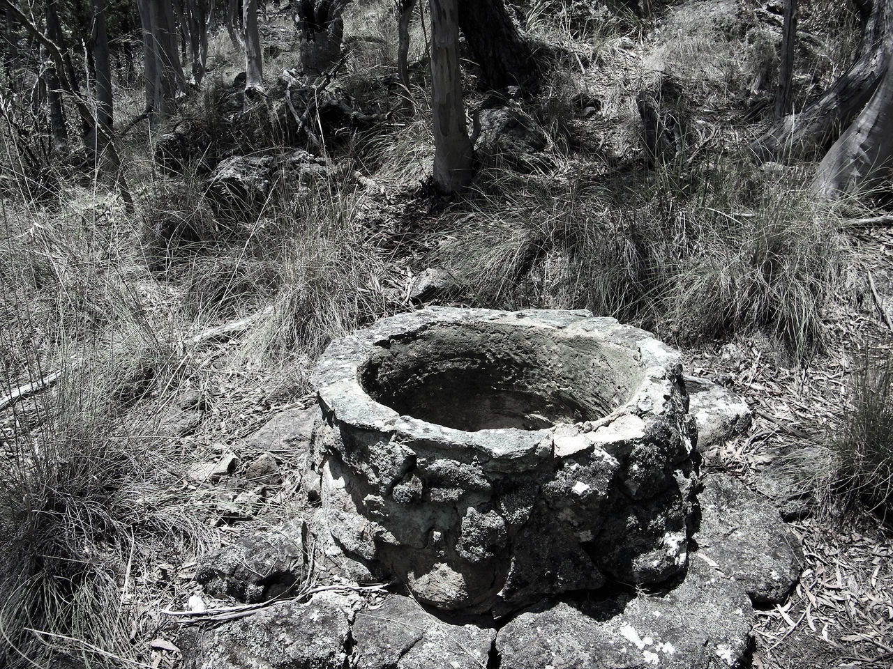 "Ok anyone seen ""The Ring"" yeah??? Look at that Well and wonder why I wanted to walk on as fast as I could :-P Black And White With A Hint Of Colour Close-up Day No People Outdoors The Ring Water Well Imagination Black And White Landscape Black And White Photography Nature Makes Me Smile Creativity Everywhere My Life My Adventure Photography Everywhere Growth Low Angle View Outdoors Photograpghy  Australian Landscape"