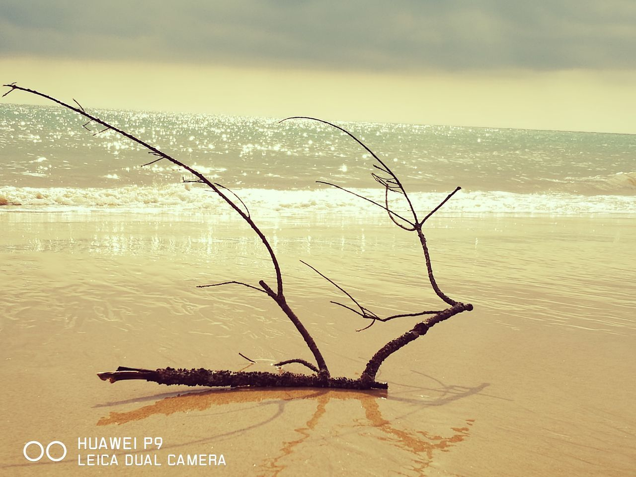 water, nature, sea, scenics, beauty in nature, horizon over water, outdoors, tranquility, sky, tranquil scene, no people, silhouette, sunset, beach, day, dead tree
