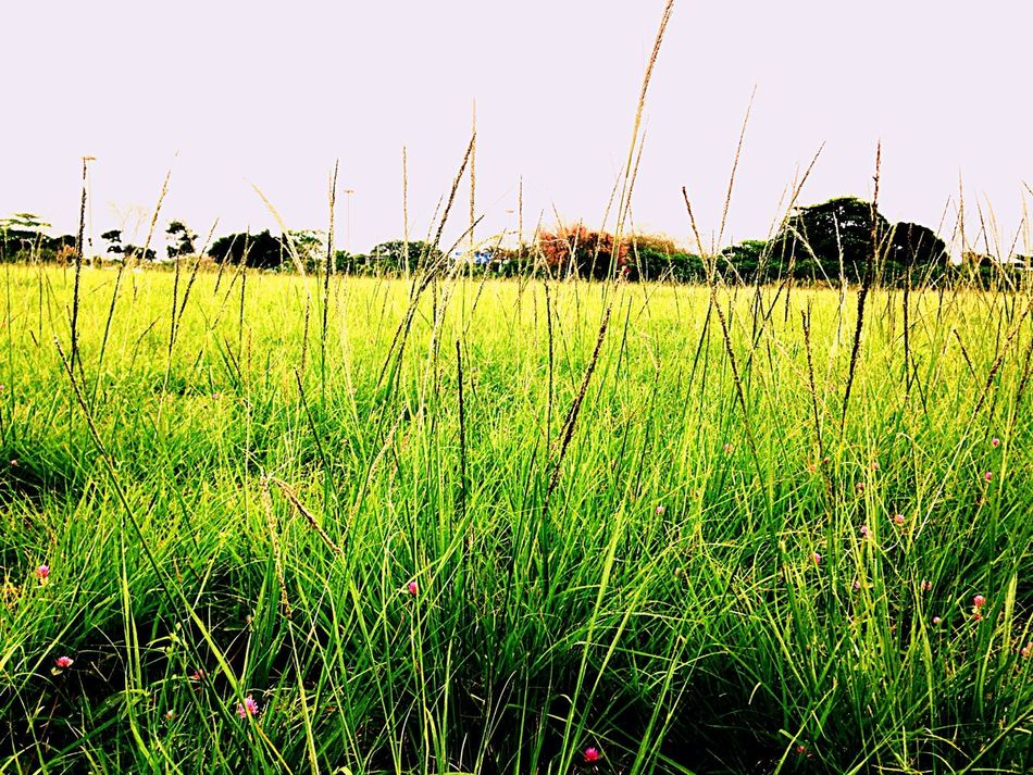 Nature Relaxation Green Color Growth Grass Tranquility Clear Sky Tranquil Scene Field Plant Nature Rural Scene Remote Day Landscape Grassy Scenics Surface Level Solitude Beauty In Nature
