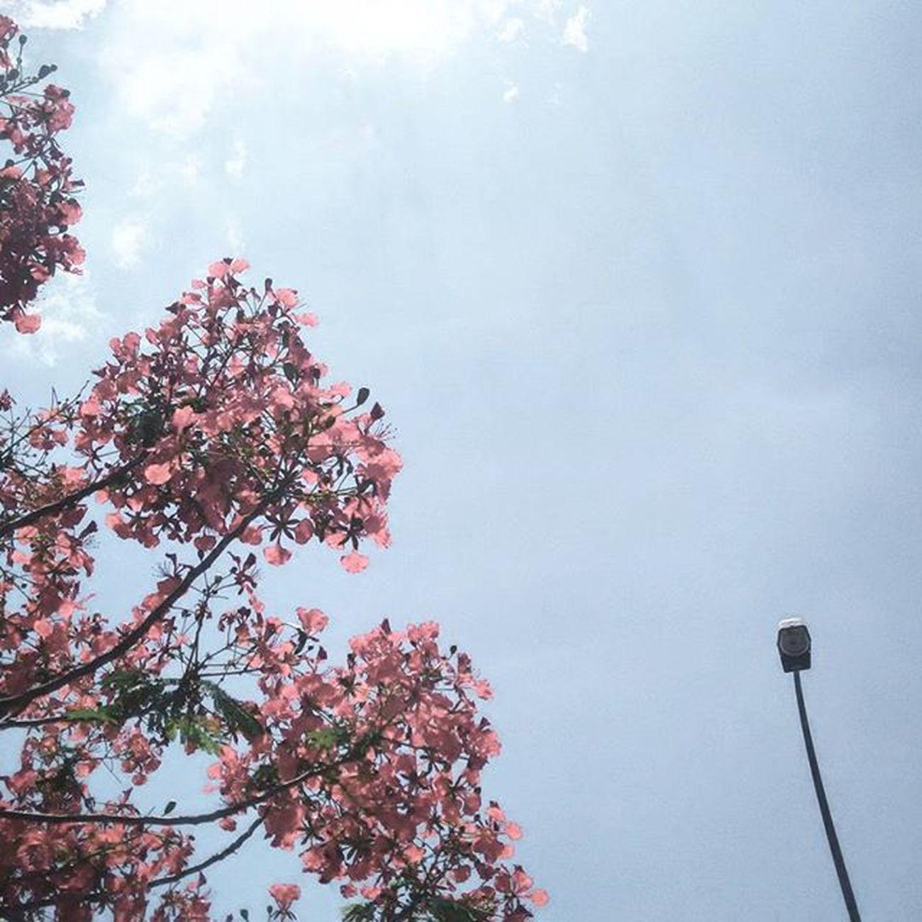 Shine bright like a sun, Free your life like an air, Eat what ever you want. 😜 Annasiihah Annayangpunya Flower Kedah