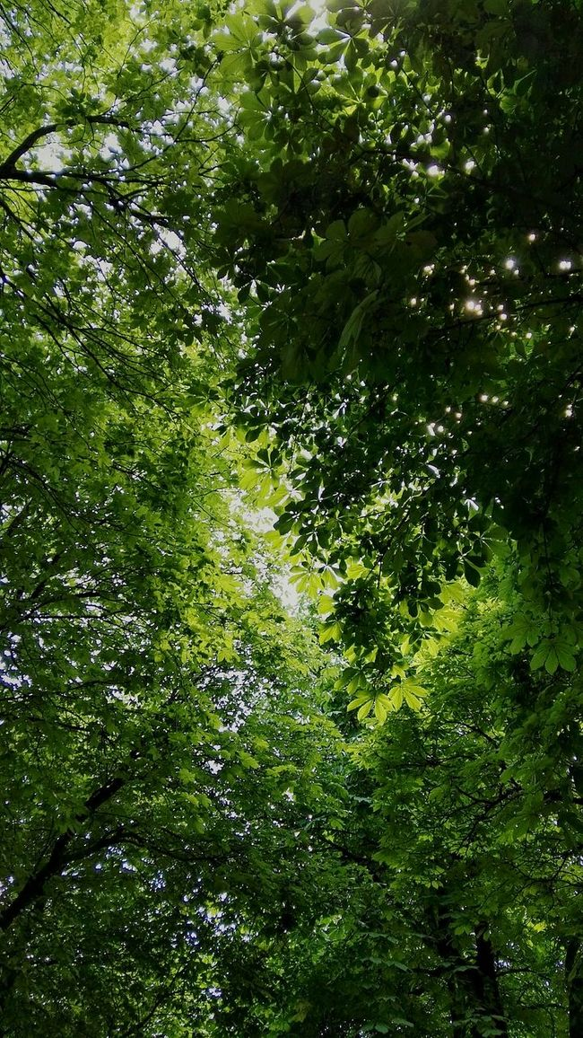 Green Nature Blätterdach Leaves🌿 Passage Greenery Nature Leaves Leaves Leaves Nature Photography Green Tree's Green Green Green!