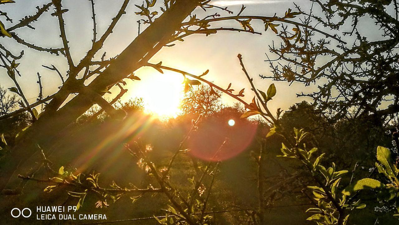 Sundown on Mallorca.... Tree Sunset Nature Beauty In Nature Outdoors Beauty In Nature PalmaDiMaiorca Originalpicture GetbetterwithAlex Nature Sunlight