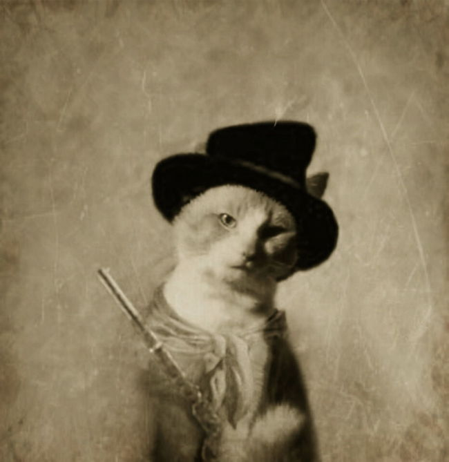 Pini the Kid. Cat Cats Cat Lovers OutLaw Gunslinger  Cowboy Cowboy Hat Cowboy Cat Cowboy Cats Old Old Photo Aged Worn Tattered Sepia Sepia Toned
