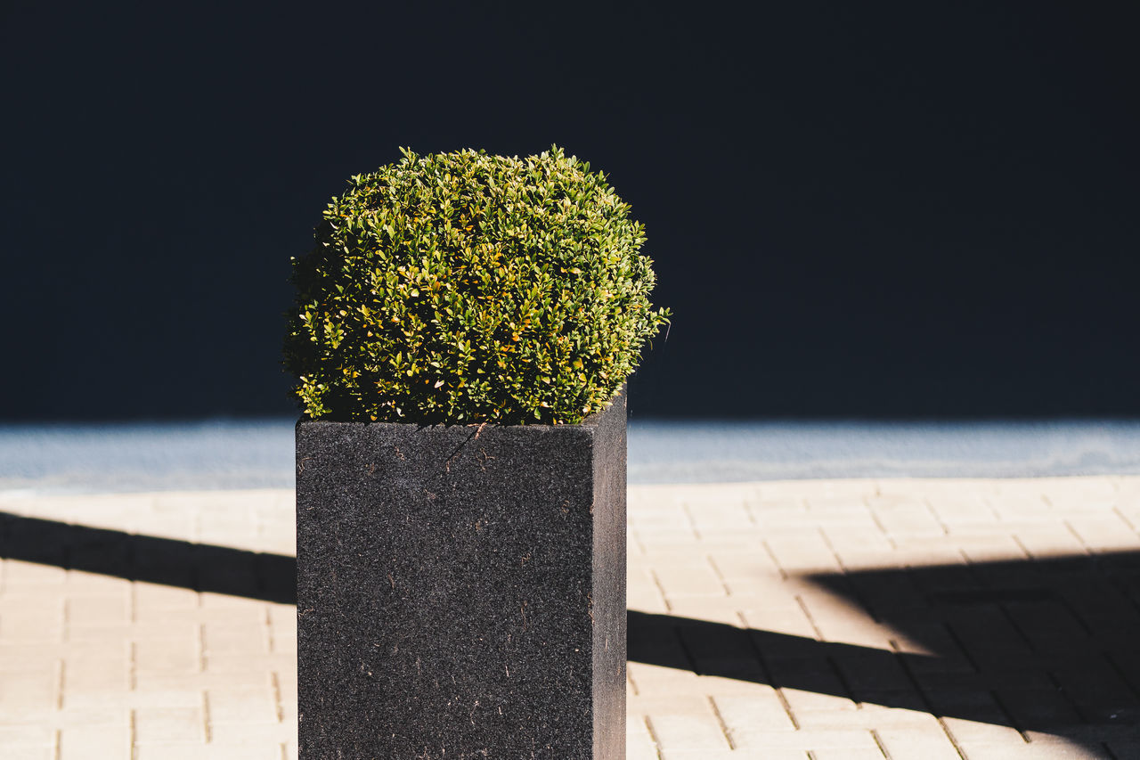 Buxus sempervirens Architecture Buxus Close-up Minimalism Nature Nature No People Outdoors Plant Shadow Sunlight Sunlight And Shadow