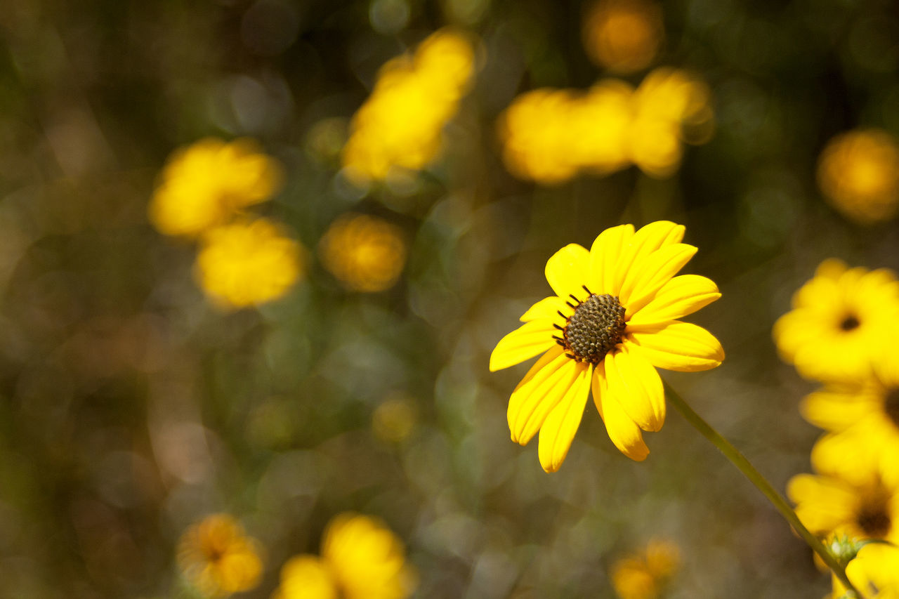 Beauty In Nature Blooming Close-up Day Flower Flower Head Fragility Freshness Growth Nature No People Outdoors Petal Plant Yellow