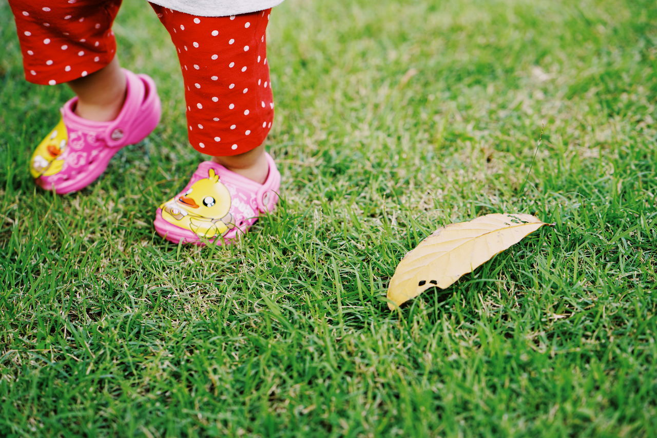 Child Grass Children Only One Girl Only Low Section Girls People One Person Childhood Green Color Autumn Human Body Part Outdoors Human Leg Nature Day Leaf Close-up Adult