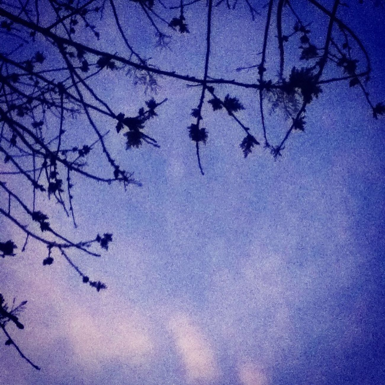 Branches Coming From The Sky <3