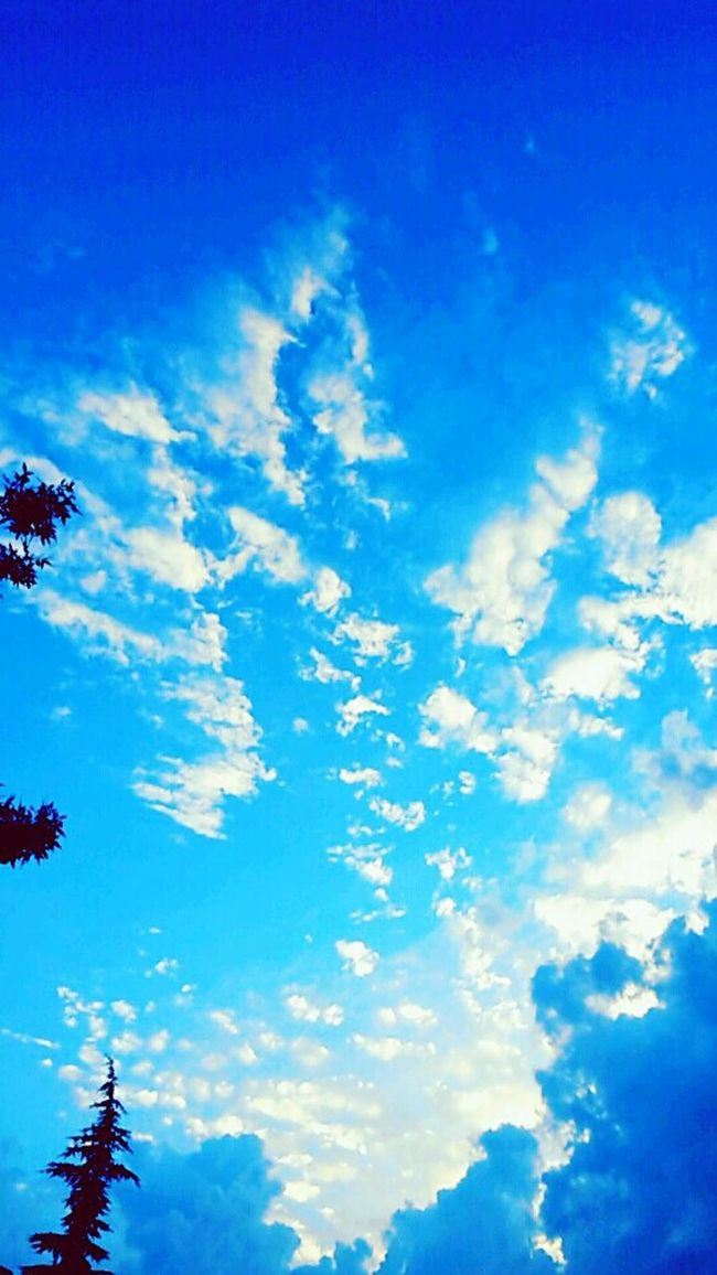 Cotton clouds ★.★ Go Go Go ! Eyeem Market Low Angle View Blue Sky Scenics Beauty In Nature Cloud - Sky Tranquility Tranquil Scene Nature Day Branch Cloud High Section Outdoors Majestic Cloudscape No People Treetop Non-urban Scene Cumulus Cloud Good Evening Clouds And Sky Colors Eyeem Turkey