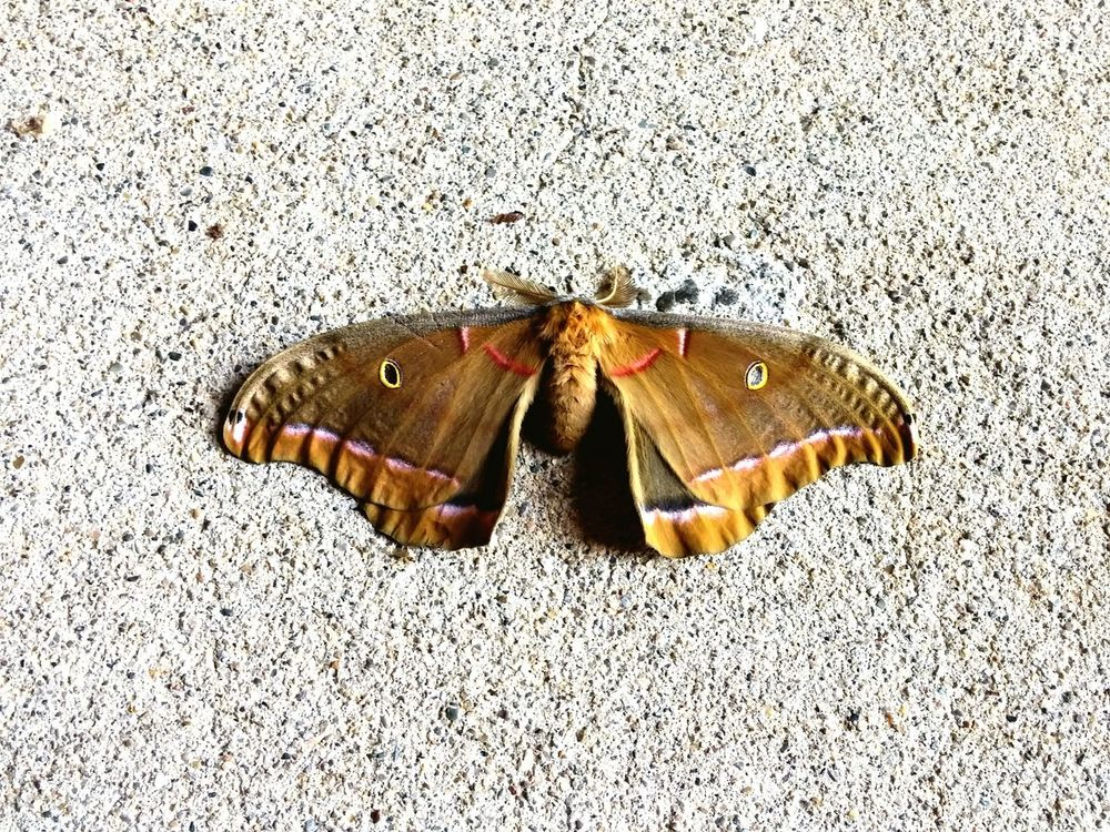 Nature On Your Doorstep Beautiful moth outside of my apartment.