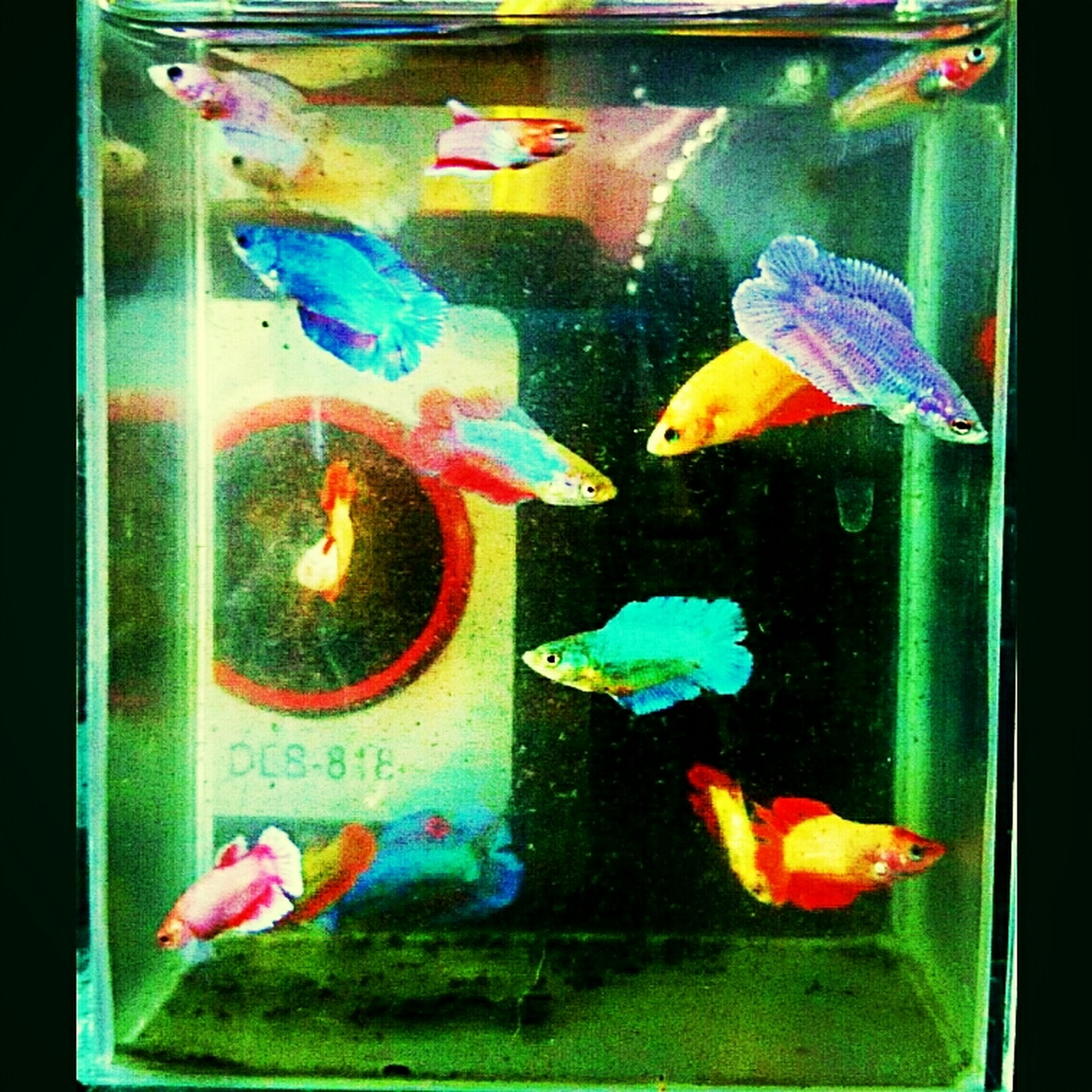 fish, indoors, transfer print, animal themes, glass - material, auto post production filter, transparent, orange color, multi colored, close-up, wildlife, animals in the wild, water, aquarium, sea life, fish tank, no people, animals in captivity, underwater
