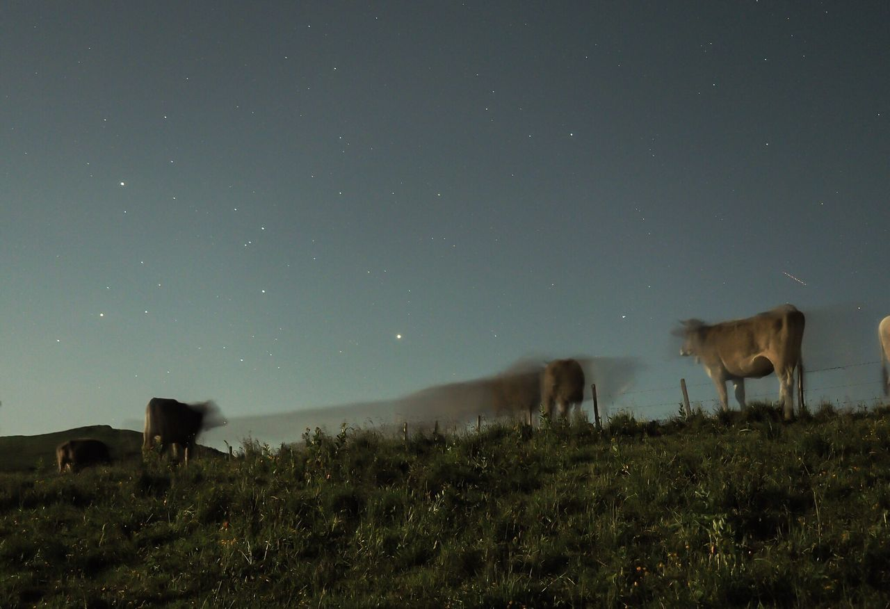 Night moo-ves Cows Grazing Cows In A Field Cows Night Moves Moo Nightphotography Longexposure Swiss Alps Alpine Pasture Cows And Stars Palfries Sarganserland Swiss Mountains Switzerland Moonlight Gonzen Herd Of Cows Olympus OM-D EM-1
