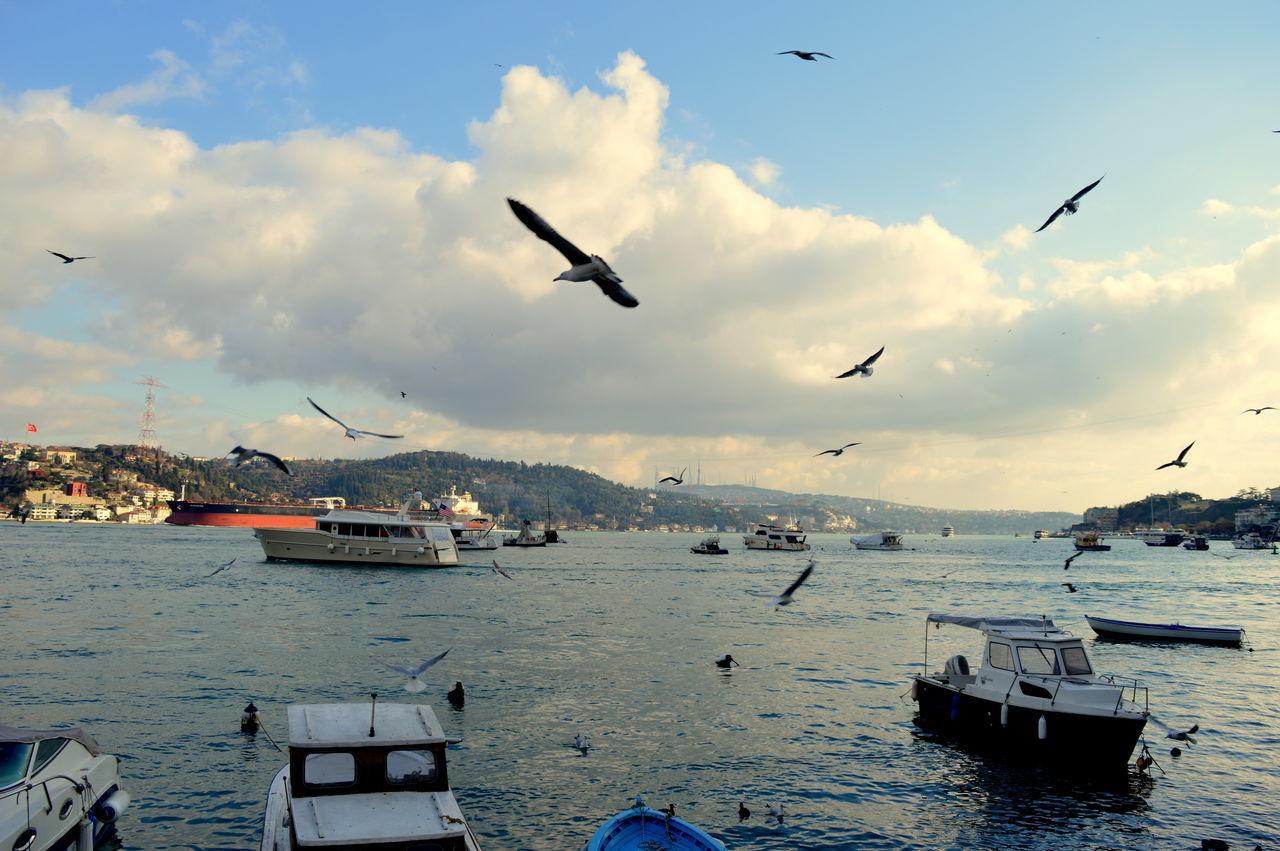 Beautiful stock photos of istanbul, Animal Themes, Animal Wildlife, Animals In The Wild, Bird