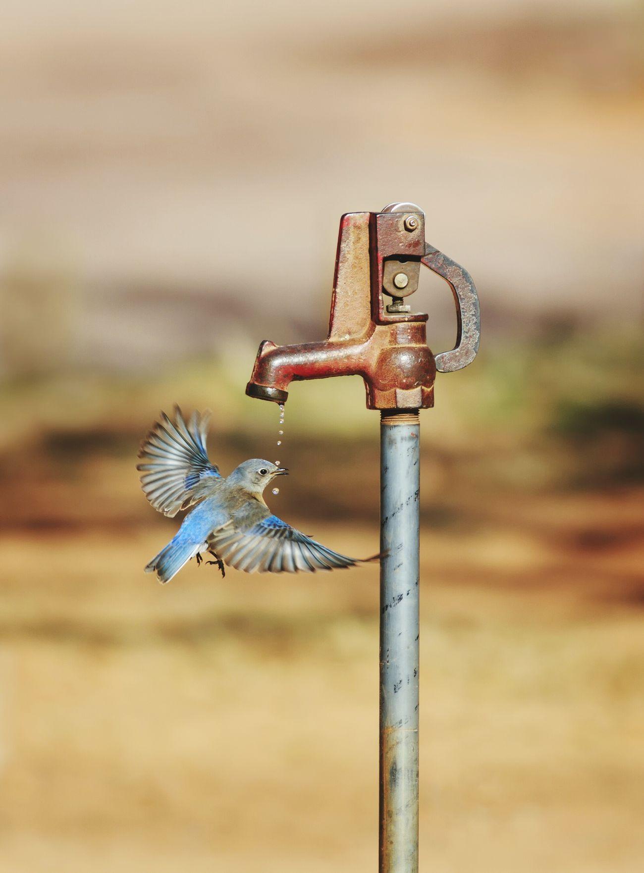 Beautiful stock photos of vogel, Animal Themes, Animal Wildlife, Animals In The Wild, Bird
