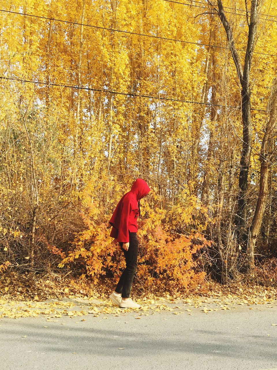 autumn, tree, full length, one person, real people, red, leaf, outdoors, change, day, nature, standing, lifestyles, forest, people