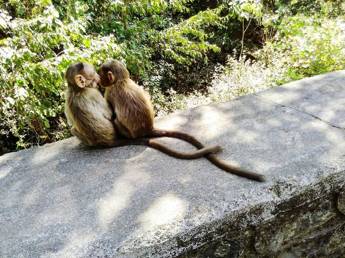 Monkey Bonding Time Friend monkey baat Monkey Business Monkeys Indian Monkeys Monkey Mood Animal Photography Animal In Moods Photography - Ravi Ravi Ravi_photography Frame It! Frame monkey in frame Animallovers Animals Posing Animal Themes animal posing India Indian Indianmonkey