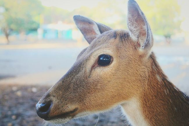 Hanging Out Taking Photos Check This Out Hello World Cheese! Enjoying Life I Love Indonesia Beautiful Nature Nice Enjoying Life Beautiful Taking Photos INDONESIA Relaxing Like4like Hello World Jakartaphotography Animals Love Care Animal Love Deer Cute Cute Animals Lovely