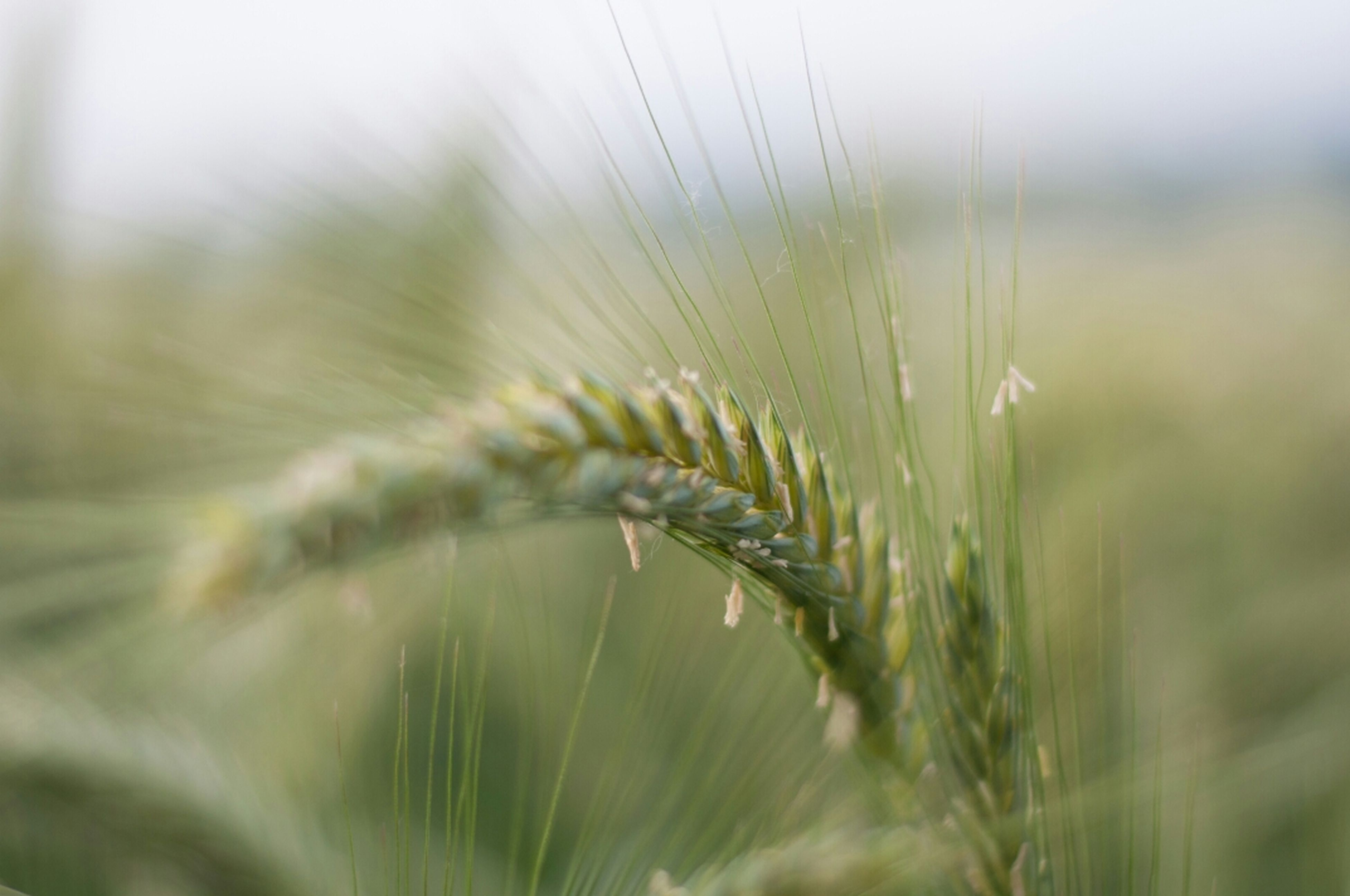 focus on foreground, close-up, growth, plant, grass, nature, selective focus, water, drop, blade of grass, beauty in nature, fragility, spider web, tranquility, wet, freshness, stem, day, field, outdoors