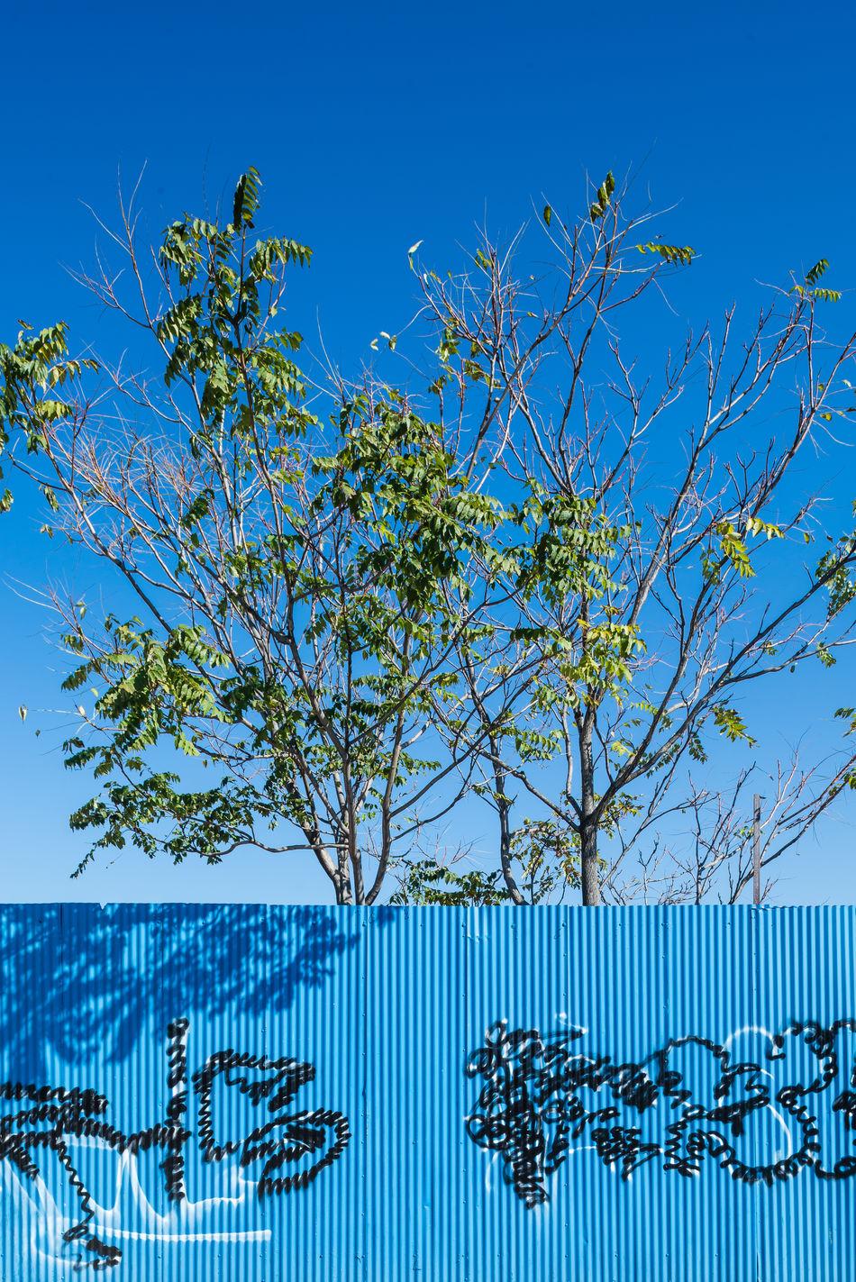 Blue Sky Branch Brooklyn Color Blue Colors Fence Gowanus GowanusCanal Green Color Hidden Places New York New York City Newyork Newyorkcity Outdoors Pastel Power Tree USA USA Photos