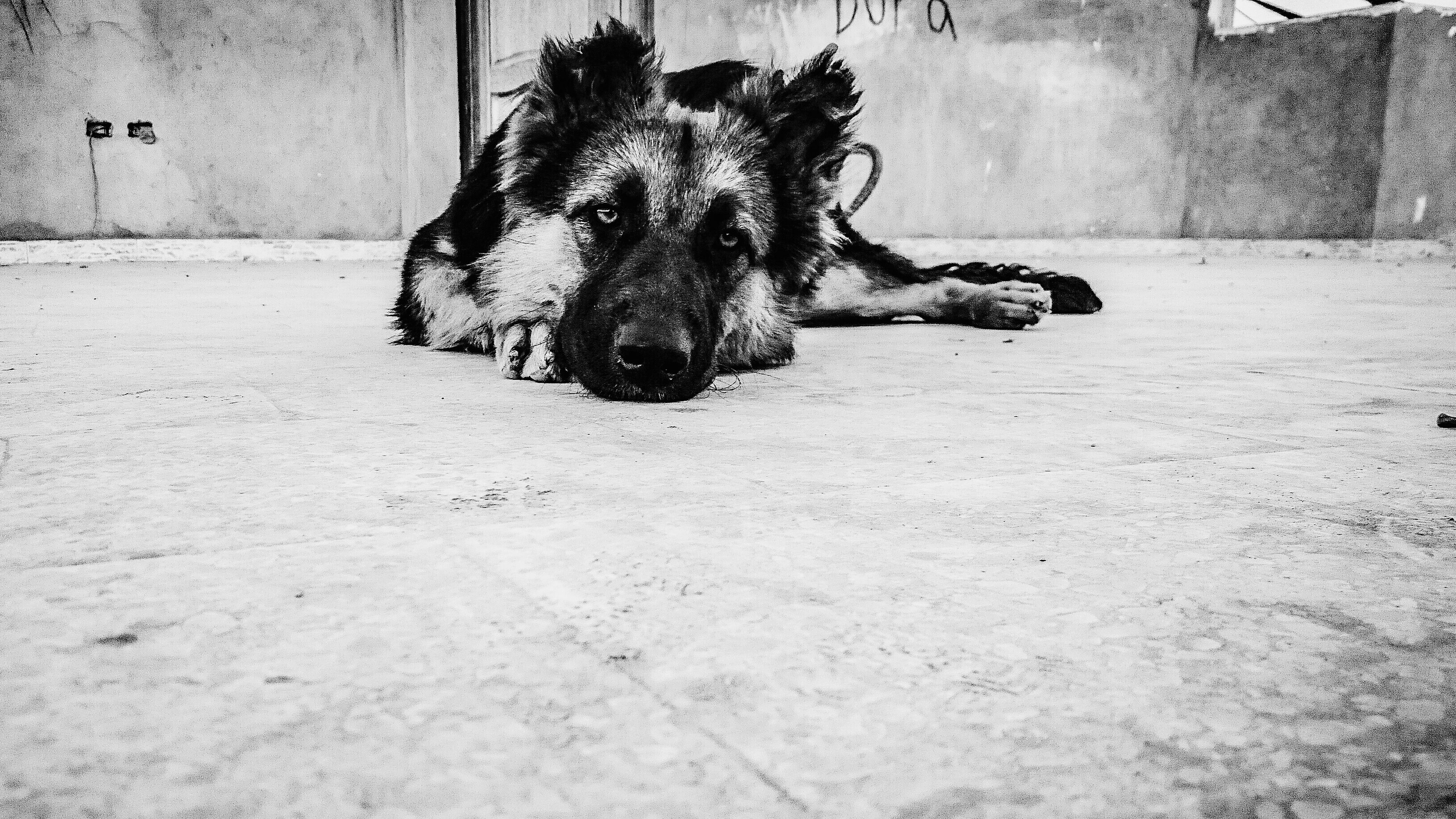 animal themes, mammal, domestic animals, animal head, one animal, no people, outdoors, pets, day, close-up