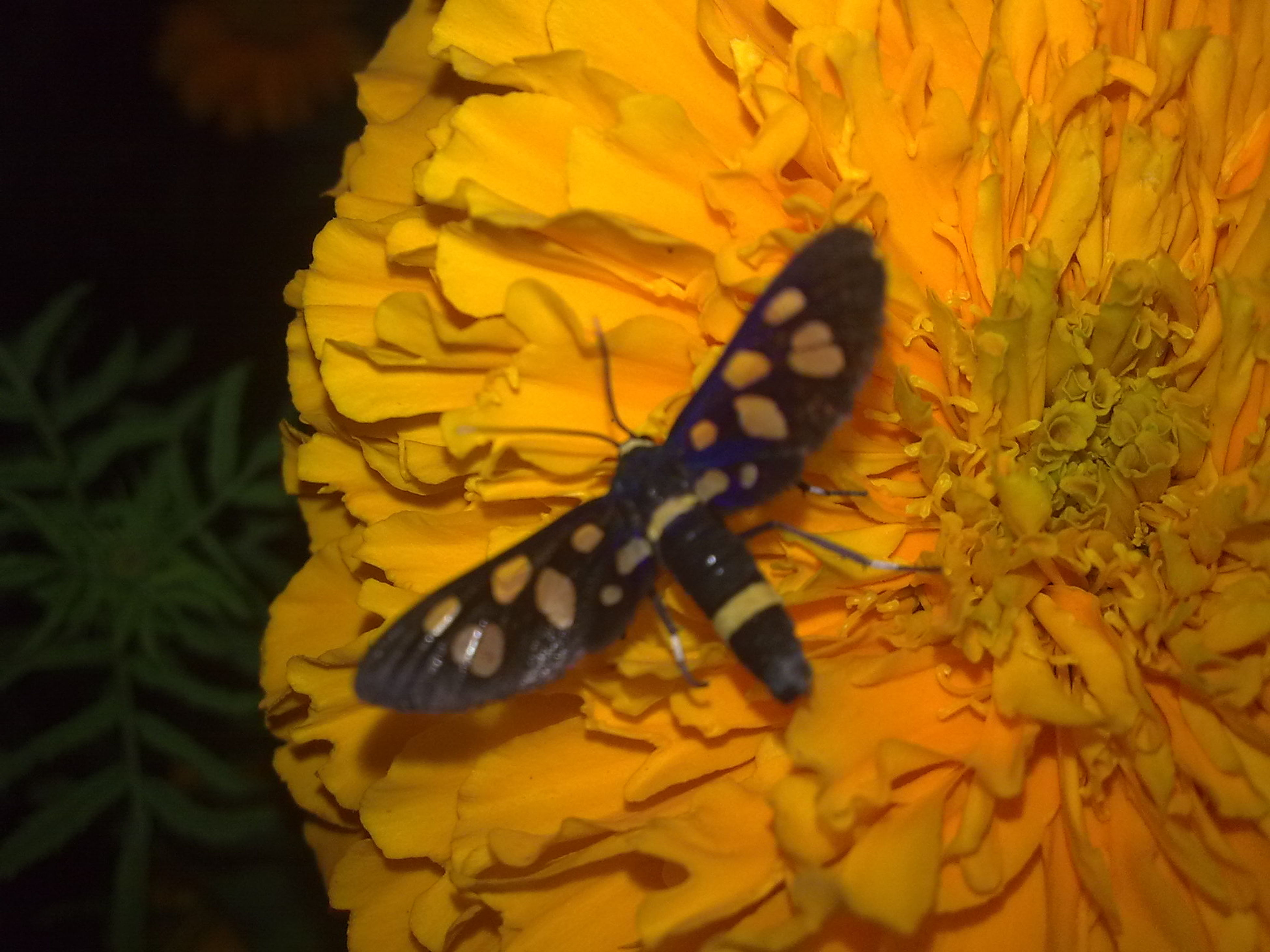 one animal, animal themes, animals in the wild, wildlife, flower, insect, yellow, pollination, petal, butterfly - insect, beauty in nature, fragility, nature, close-up, butterfly, freshness, symbiotic relationship, plant, growth, flower head