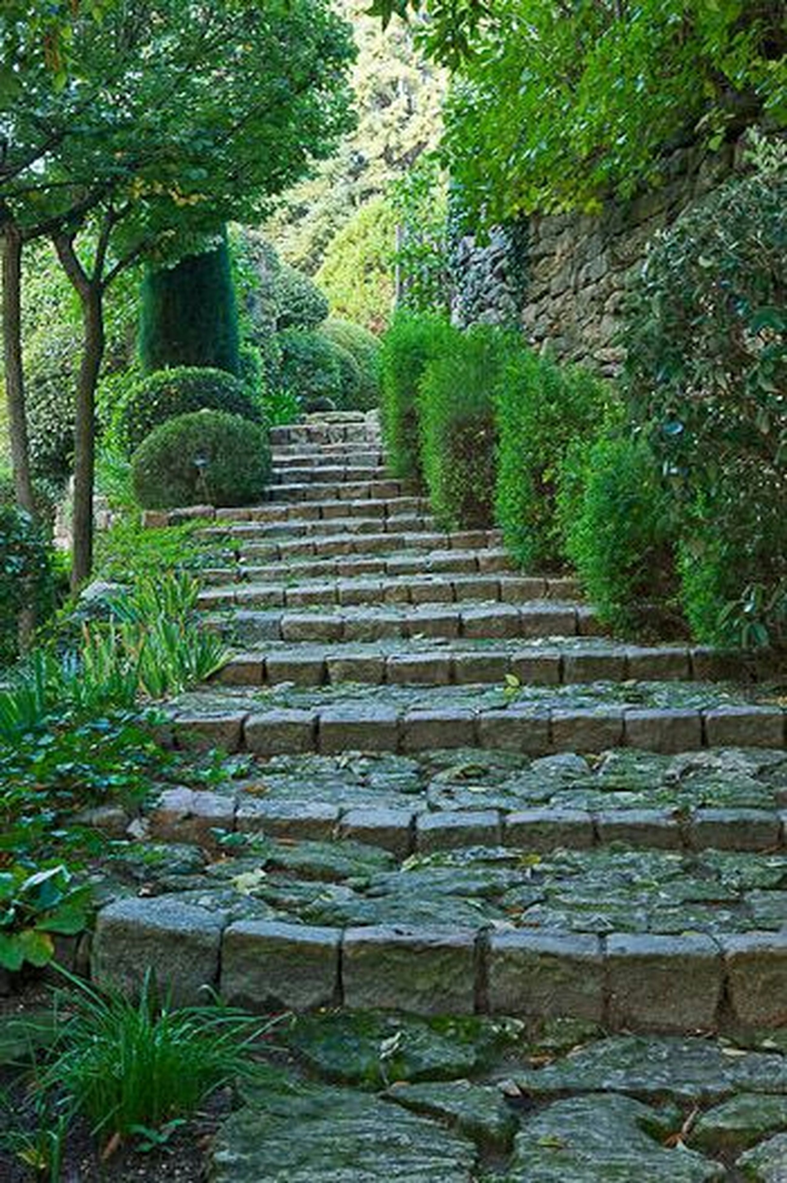steps, tree, steps and staircases, built structure, staircase, the way forward, architecture, plant, growth, stone wall, green color, railing, stone material, forest, park - man made space, day, nature, outdoors, tranquility, building exterior