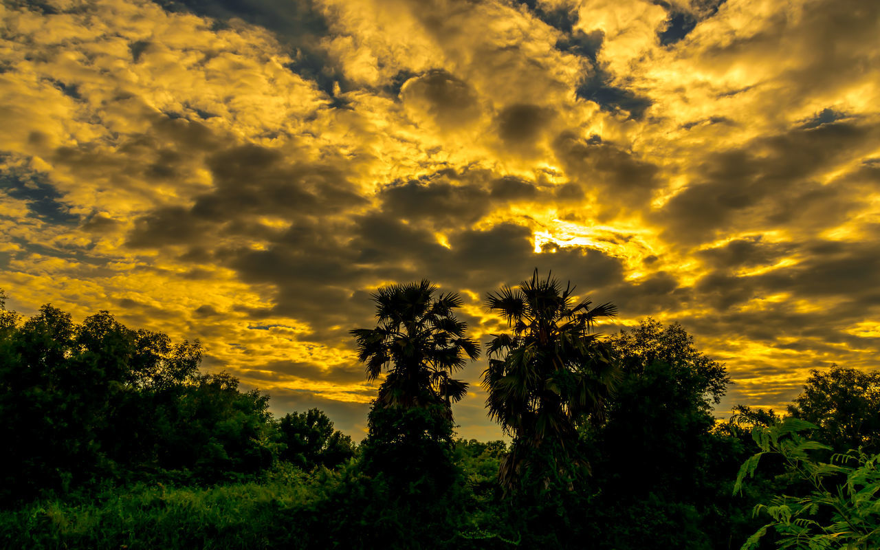 tree, nature, beauty in nature, sunset, tranquility, yellow, tranquil scene, scenics, growth, dramatic sky, cloud - sky, sky, no people, palm tree, landscape, silhouette, outdoors, tree area, day