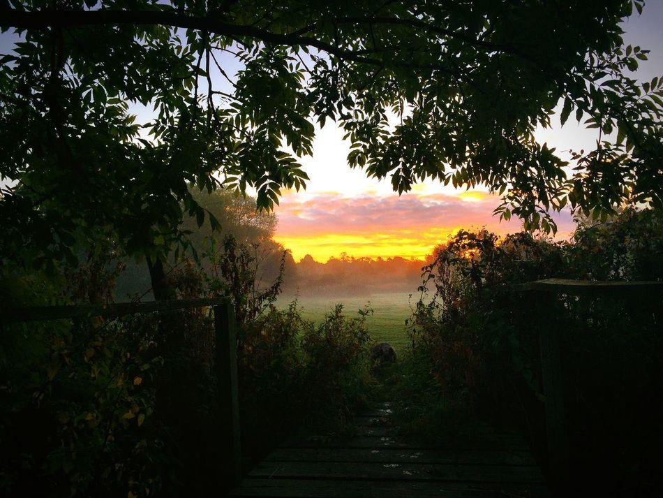 Spot the Frenchie! Frenchbulldog Dawn Cheshire Alderley Edge Trees Sunrise Clouds Nature