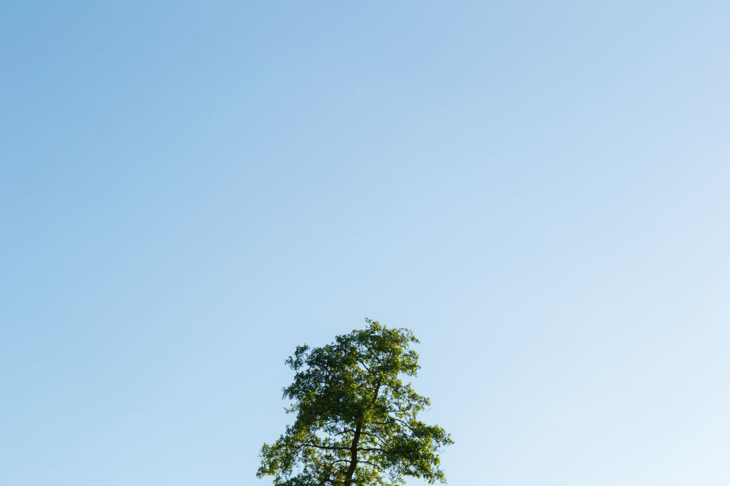 Blue Gradient Beauty In Nature Blue Clear Sky Copy Space Day Green Color Growth Low Angle View Minimal Composition Nature No People Outdoors Scenics Sky Tree