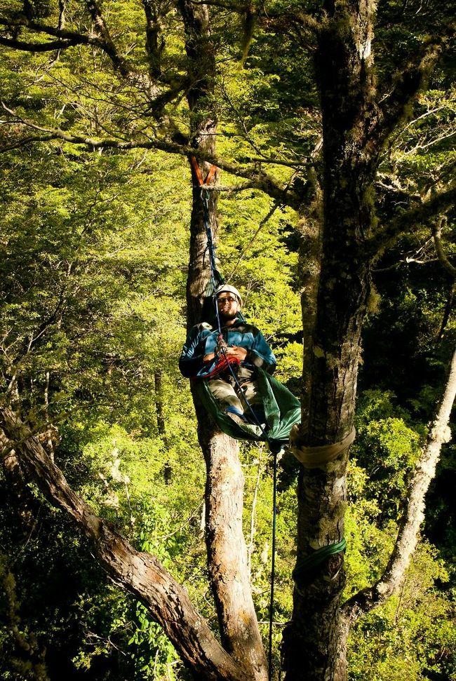 Arborismo árbol Selvavaldiviana Valdivia Chile Siesta Descanso Hamaca Şūr