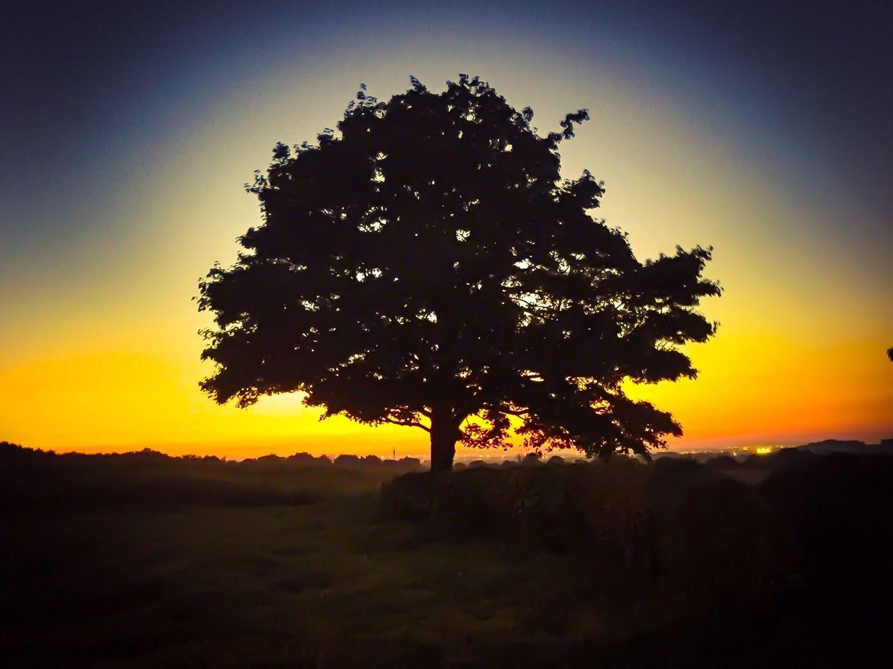 Trees Sunset Sunset Silhouettes Sunset_collection Skyline