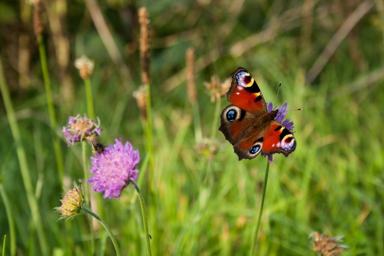 Beautiful stock photos of butterfly, Animal Themes, Animal Wing, Animals In The Wild, Beauty In Nature