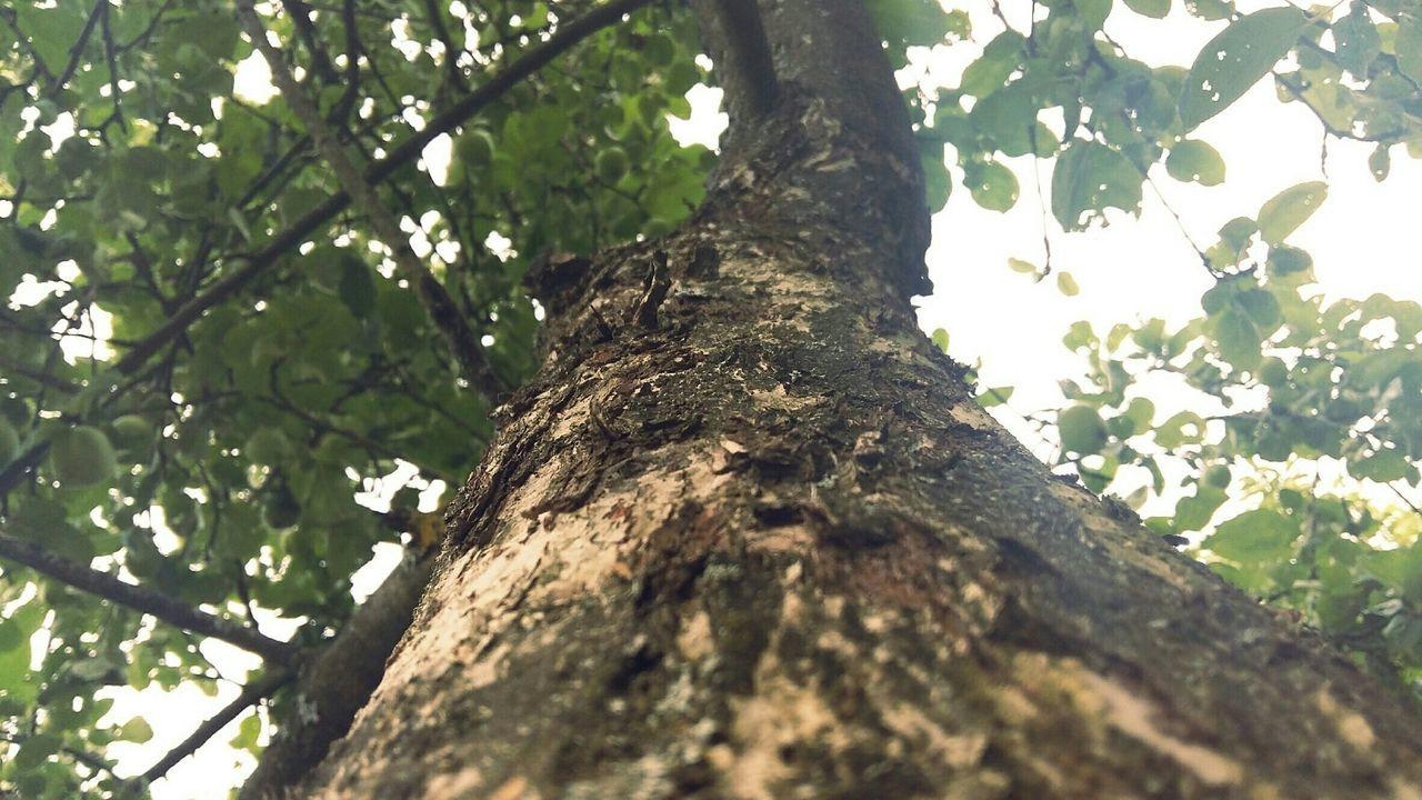 Tree And Sky 🌳 Following Please Like4like Following Like Follow4follow Followme Summer лето дерево огород зеленый Коричневый Tree Sky