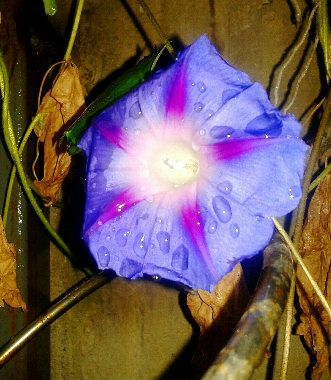 flower, fragility, close-up, purple, petal, freshness, high angle view, flower head, blue, water, no people, yellow, multi colored, wet, day, indoors, drop, pink color, nature