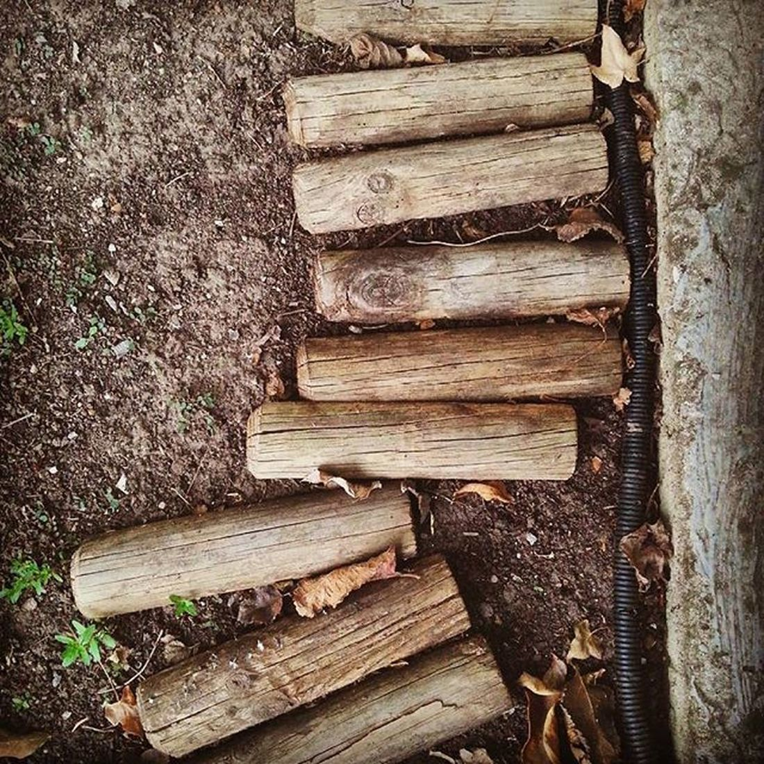100happydays Listones de madera. Listones Demadera Tiras Tablas Wood Wooden Ribbons Planks Panels árbol Tree Nature Land Ground Dust Tierra Vegetacion