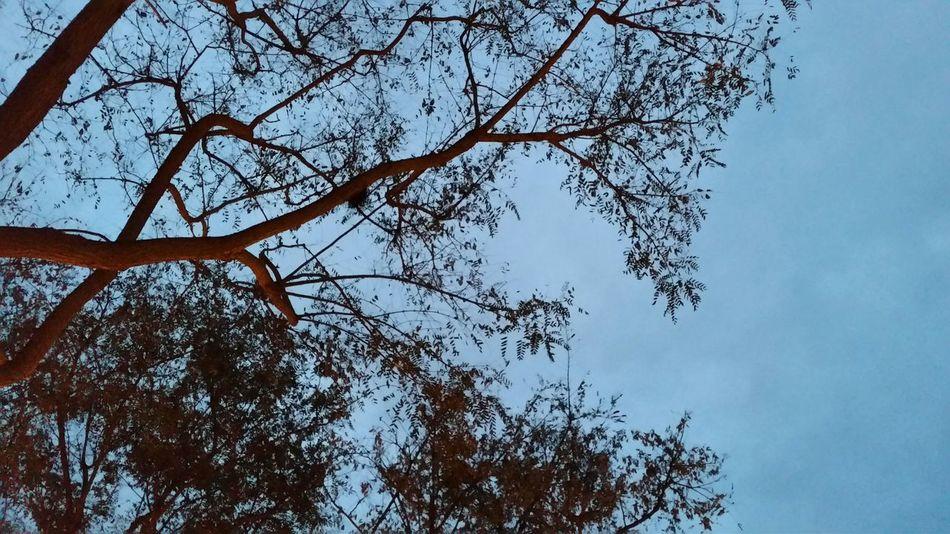 Tree & Blue Tree Nature Sky Hugging A Tree