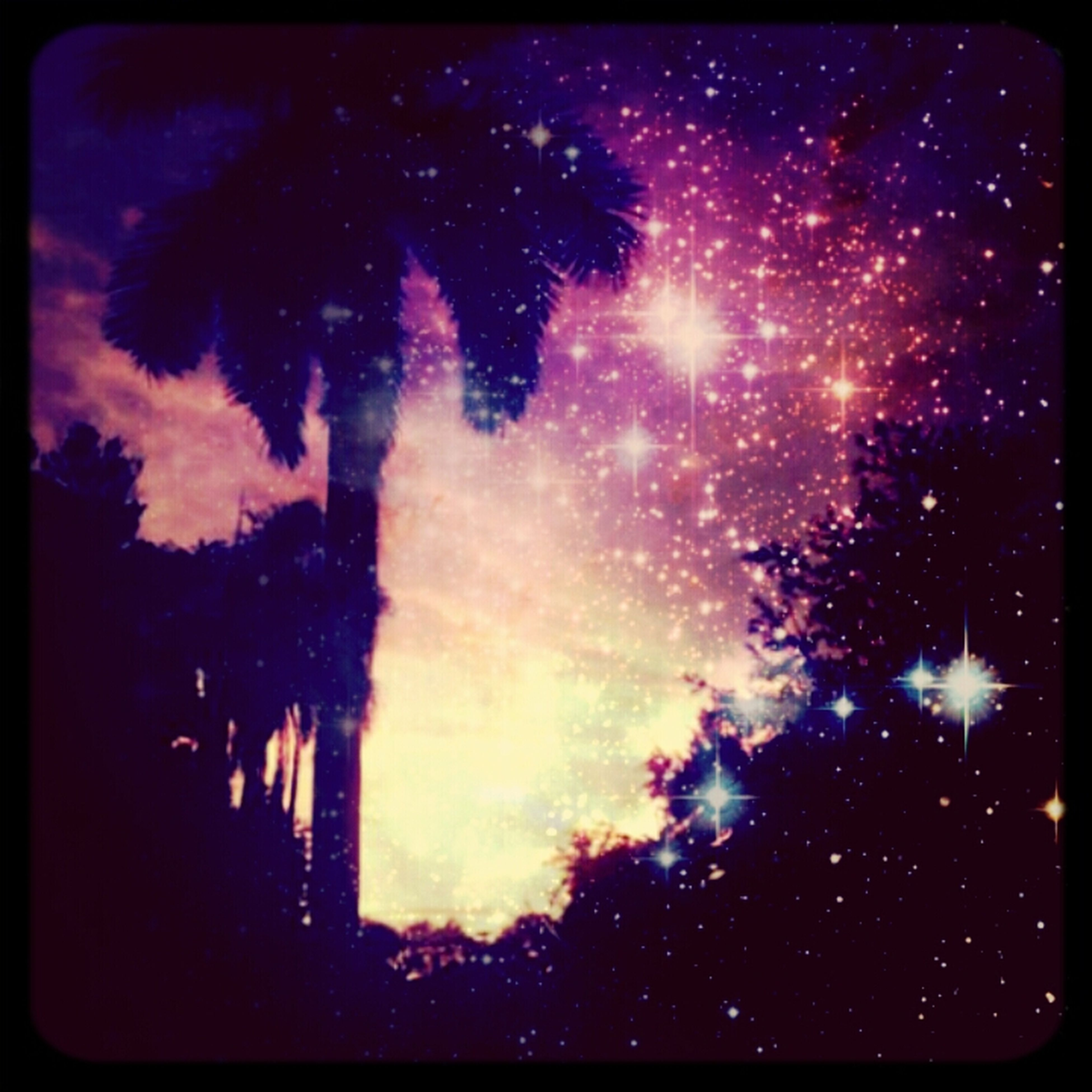 transfer print, night, low angle view, tree, sky, auto post production filter, silhouette, illuminated, beauty in nature, nature, scenics, star - space, outdoors, glowing, dark, no people, growth, tranquility, dusk, firework display