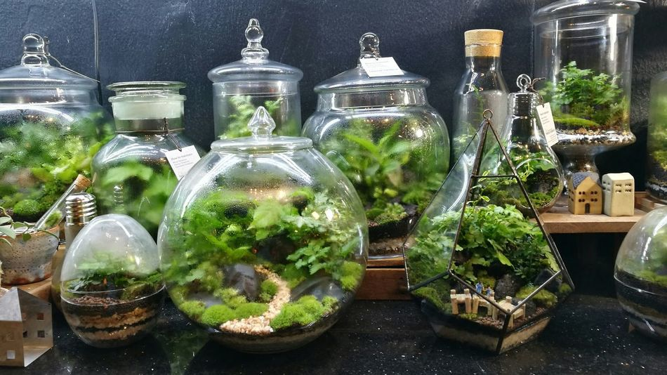 Taking Photos Decorative Enjoying Life Nice Photography Traveling Growth Enjoying Life Goog Times Green Growing Decoration Taking Photos Planting Plants And Flowers Plants Terrarium Glass Hanging Out Travel Nightphotography Outdoors Garden Small Garden