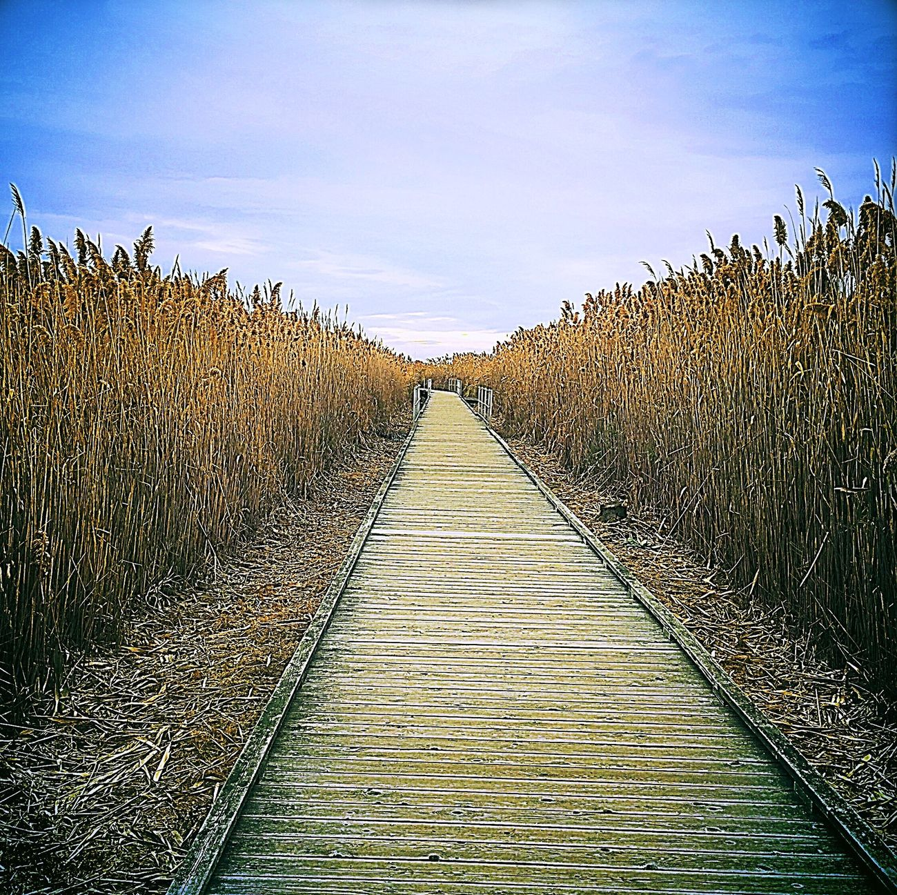The path to... Wooden Path Mystery Taking A Walk Outdoors Meadowlands