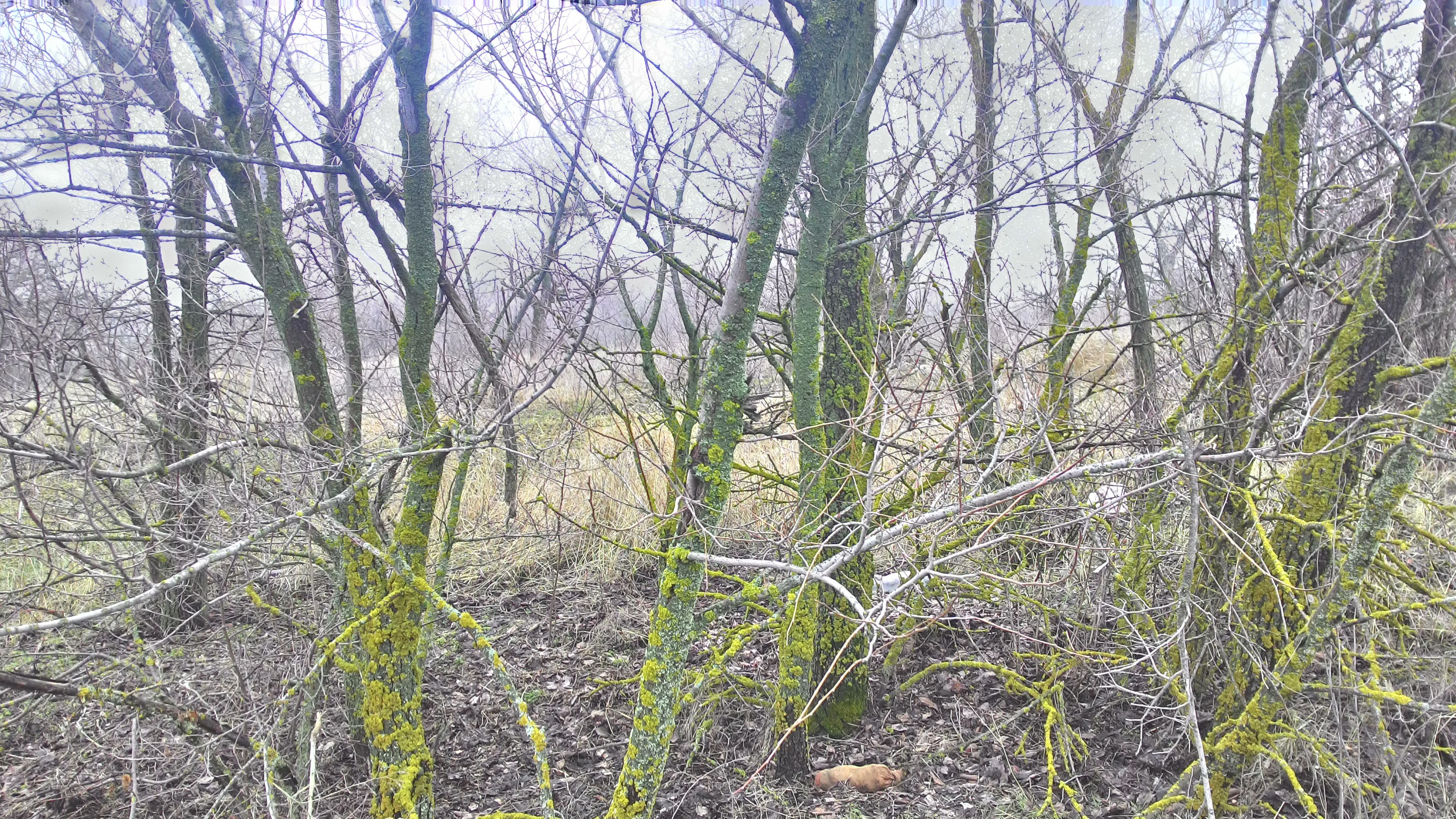 tree, bare tree, branch, tranquility, growth, nature, forest, tree trunk, tranquil scene, beauty in nature, plant, scenics, non-urban scene, day, woodland, outdoors, no people, grass, landscape, non urban scene
