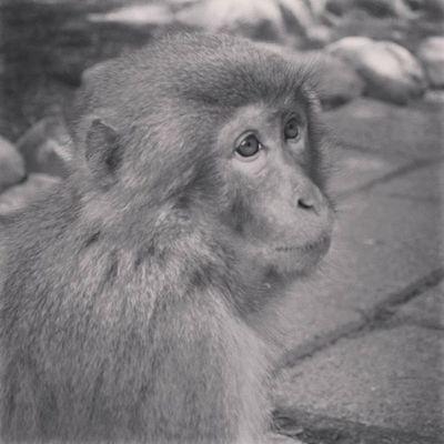 大分 高崎山 サル サル 猿 おサル