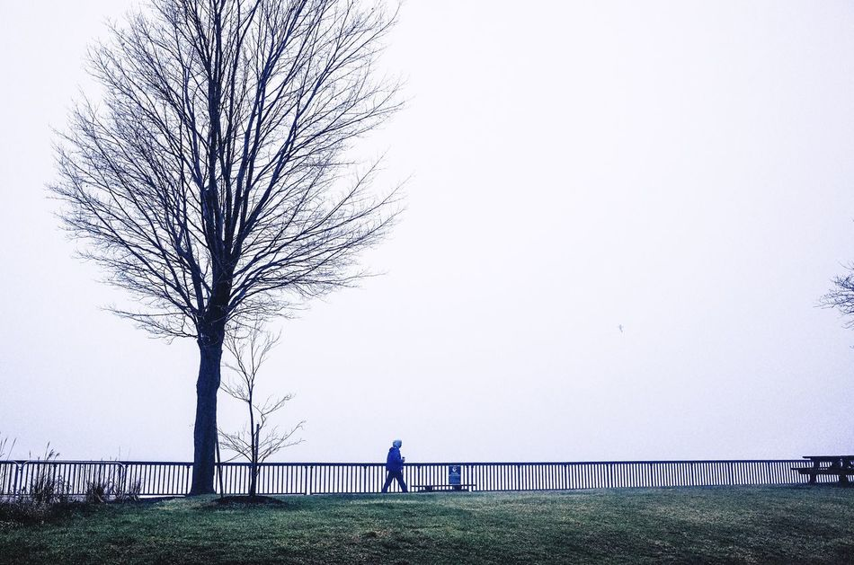 Buffalo morning Tree Lifestyles One Person Full Length Bare Tree My Traveling Photography From My Point Of View My Street Photography Streetphotography Morning Foggy Morning Buffalo Outdoors Exceptional Photographs Urban Exploration