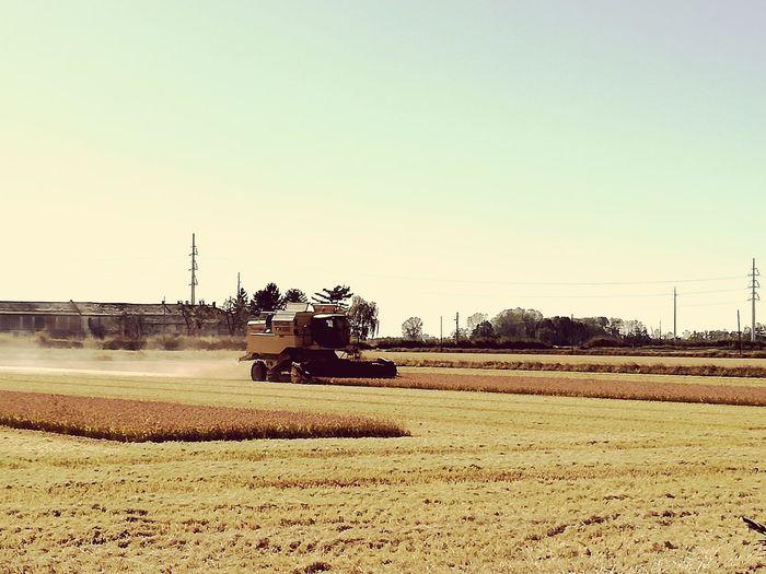 Nature Rice Field Raccolta Riso