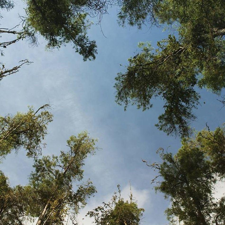 Mira hacia el cielo, tiene mucho más que mostrar que mirar al suelo LivingVenezuelaVE Increiblevzla Elnacionalweb Ig_Venezuela_pro VibraVenezuela Loves_venezuela Instavenezuela Nuestravenezuela_ Gf_venezuela Ig_caracas_ Venezuelansite Venezuela_estrella Ig_venezuela_ InstaLOVEnezuela